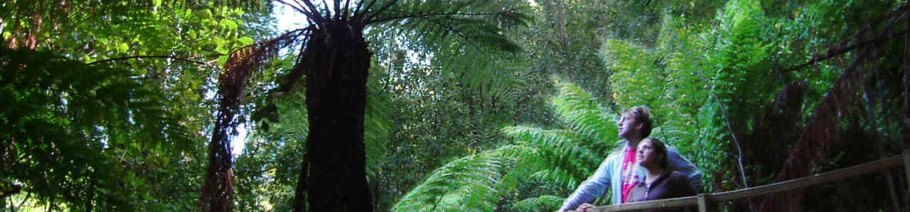 tree fern bridge.preview